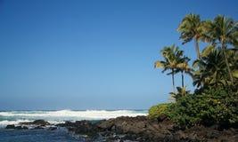 Tropisches Ufer Stockfotografie