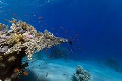Tropisches Unterwasserleben lizenzfreie stockfotografie