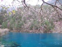 Tropisches Wasser in jiuzhaigou Porzellan mit Rosa verlässt Unkosten stockbild