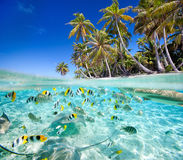 Tropisk ö över och undervattens- Arkivfoton