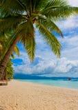 Tropisk ö - hav, himmel och palmträd Royaltyfri Foto