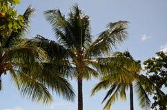 Tropisk ö, horisont Arkivfoto