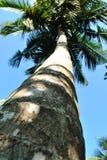 Tropisk ö i havet av Sri Lanka Arkivbild