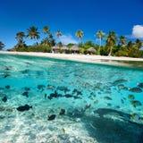 Tropisk ö under och över - vatten Royaltyfria Bilder