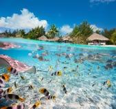 Tropisk ö under och över - vatten Royaltyfri Bild