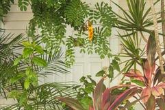 Tropisk öKey West bakgrund med färgrika men dämpade växter framme av ett suddigt avsnitt av ett vit trähus och dörr arkivbild