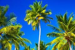 tropisk abstrakt bakgrund Arkivbild
