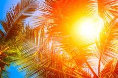 Tropisk abstrakt härlig exotisk bakgrund Arkivfoton