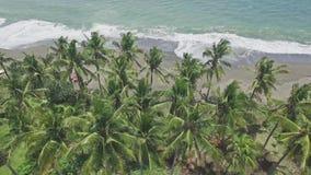 Tropisk antenn 4k för härliga palmträd stock video
