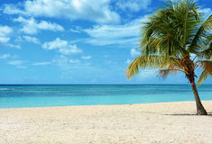 tropisk bakgrund Royaltyfria Foton