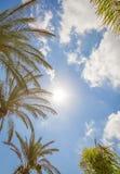 Tropisk bakgrund av palmträd över en blå himmel Arkivfoton