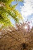 Tropisk bakgrund av palmträd över en blå himmel Royaltyfria Foton