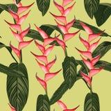 Tropisk bakgrund för grön sommar med exotiska palmblad och blommor Fotografering för Bildbyråer