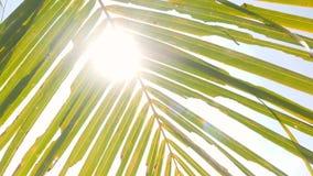 tropisk bakgrund Gröna kokosnötpalmblad mot strålar för blå himmel och sol 4K thailand lager videofilmer
