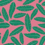 Tropisk bakgrund med bananpalmblad Rosa bakgrund Royaltyfri Bild
