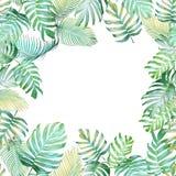 Tropisk bakgrund med den Monstera philodendronen och palmblad I Arkivfoto