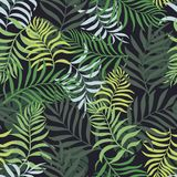 Tropisk bakgrund med färgrika palmblad Stranda av hår vänder mot in Arkivfoton