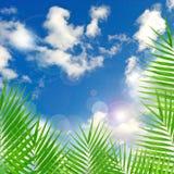 Tropisk bakgrund med linssignalljuseffekt Arkivbilder
