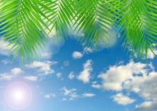 Tropisk bakgrund med linssignalljuseffekt Royaltyfri Foto
