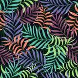 Tropisk bakgrund med palmblad Royaltyfri Fotografi