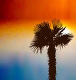 Tropisk bakgrund med palmträdet på solnedgången Arkivfoton