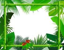 tropisk bakgrundsbamburam Arkivfoto