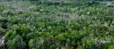 tropisk bakgrundsrainforest arkivfoton