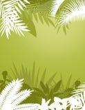 tropisk bakgrundsskog Arkivfoton