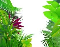 tropisk bakgrundsskog Royaltyfria Bilder