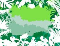 tropisk bakgrundsskog Arkivfoto