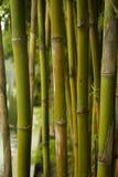 Tropisk bambu arkivbild