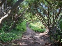 tropisk bana Fotografering för Bildbyråer