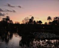 Tropisk bild fotografering för bildbyråer