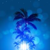 Tropisk blå bakgrund för sommar Royaltyfri Foto
