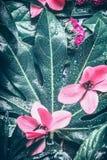 Tropisk blad- och rosa färgblommabakgrund royaltyfri foto