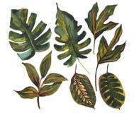 Tropisk bladuppsättning för vattenfärg Teckning av ovanliga sidor på vit bakgrund royaltyfri illustrationer