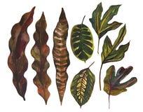 Tropisk bladuppsättning för vattenfärg Teckning av ovanliga sidor som isoleras på vit bakgrund royaltyfri illustrationer