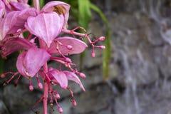 Tropisk blom- makro i botanisk trädgårdväxthus Fotografering för Bildbyråer