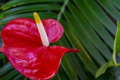 Tropisk blom- makro i botanisk trädgårdväxthus Arkivbild