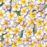 tropisk blom- modell Den målade vattenfärgen blommar plumeria Vit exotisk blommafrangipani som upprepar bakgrunden Arkivbild