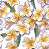 tropisk blom- modell Den målade vattenfärgen blommar plumeria Vit exotisk blommafrangipani som upprepar bakgrunden Royaltyfri Foto
