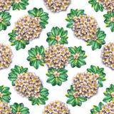 tropisk blom- modell Vattenfärgen blommar plumeria Vit exotisk blommafrangipani som upprepar bakgrunden Arkivfoton