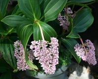 tropisk blomma arkivfoto