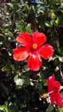 tropisk blomma Arkivbild