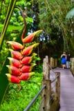Tropisk blomma i en rainforest Fotografering för Bildbyråer