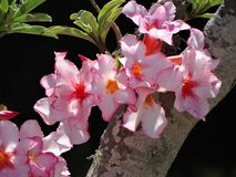 Tropisk blomma s Royaltyfri Foto