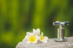 Tropisk blommafrangipani, plumeria under grönska Royaltyfri Foto