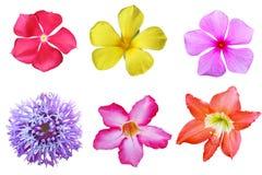 Tropisk blommauppsättning royaltyfria bilder
