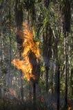 tropisk brandskog royaltyfria foton