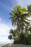 Tropisk brasiliansk strand för palmträd Arkivbilder